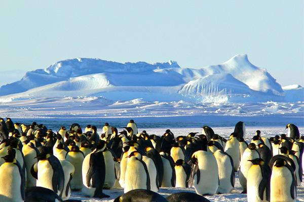 group tour antarctica